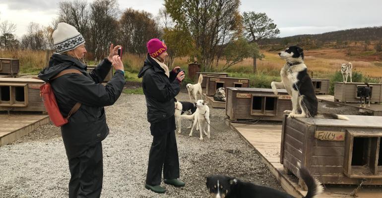 Huskies in Tromso
