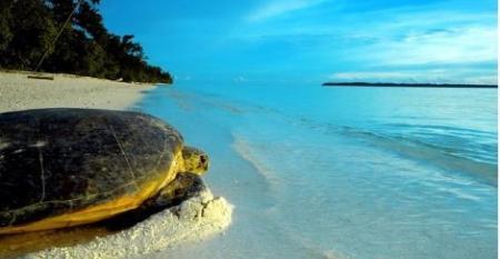 CRUISE_PO_Australia_turtle_conservation.jpg