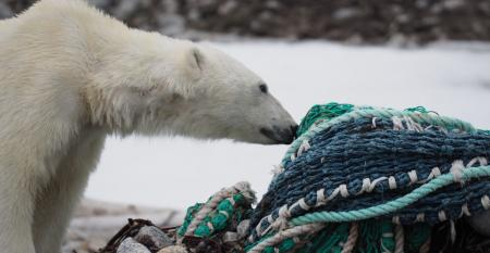 Polar bear with plastic fishing net.jpg